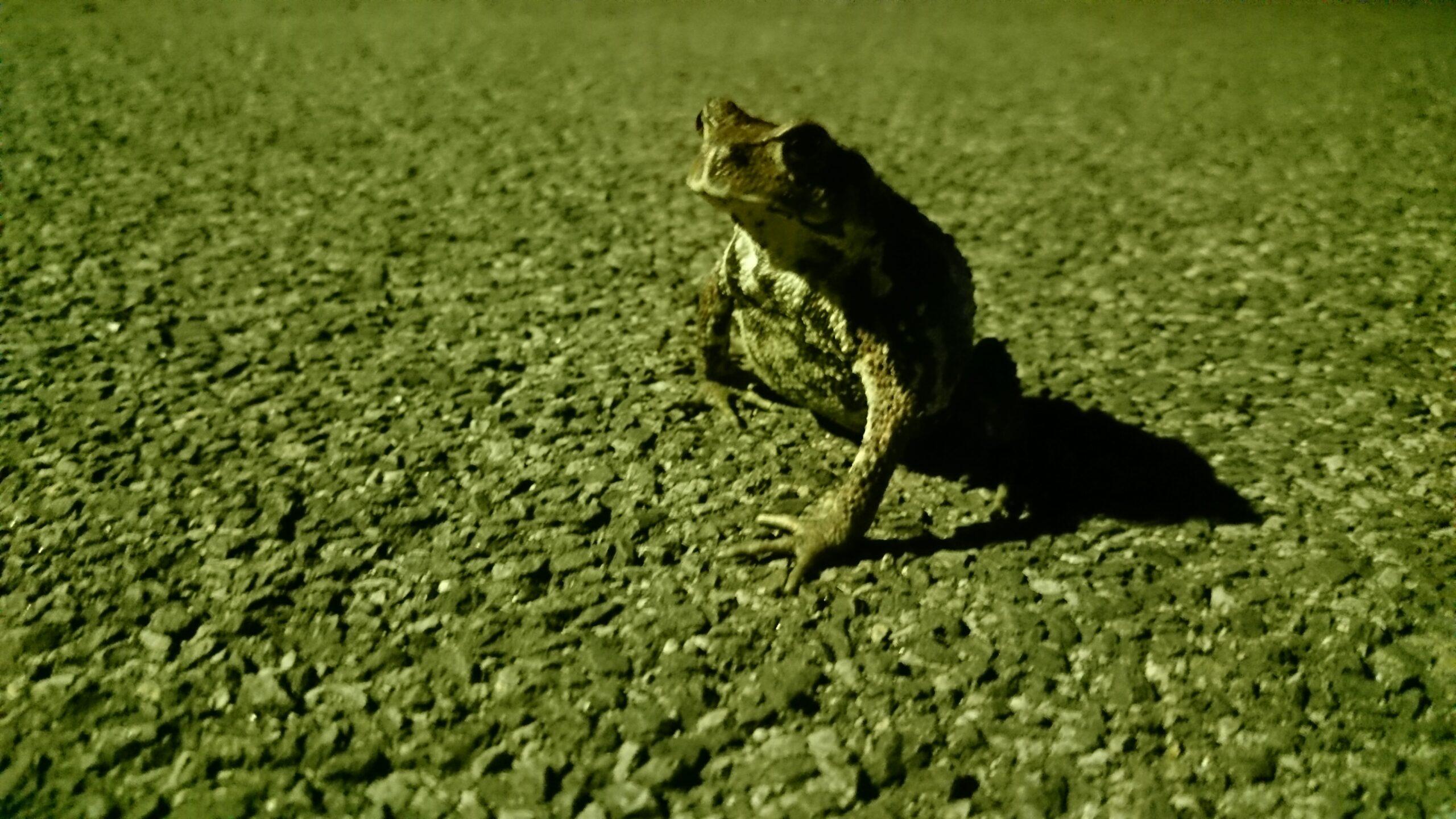 思考する蛙